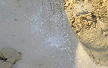 קרוב למיליארד הקטר של קרקעות מושפעות ממליחות קרקע